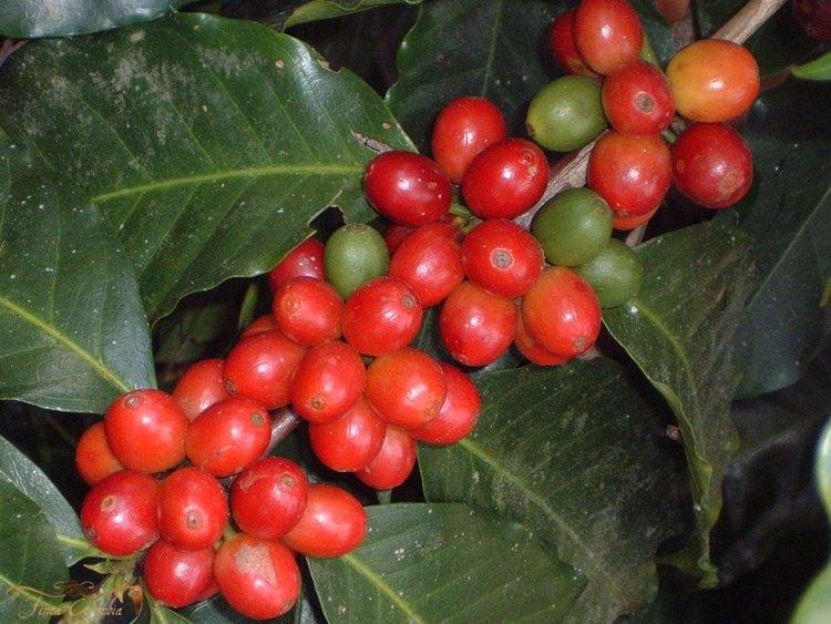 Finca Colombia, finca de café y museo